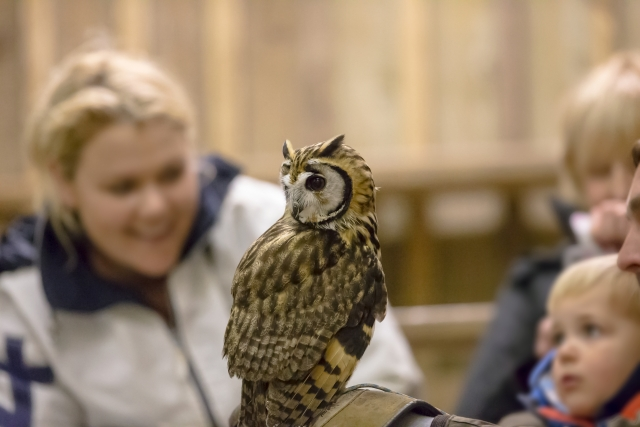 Owl Displays