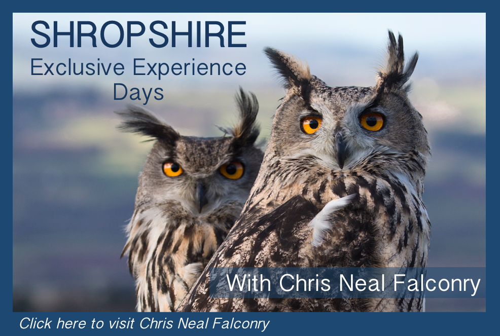 Shropshire Experience Days - Chris Neal Falconry
