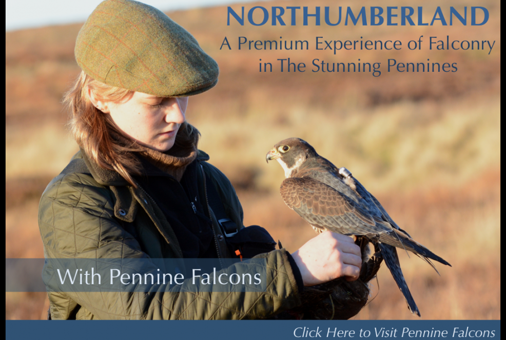 Pennine Falcons - Falconry Experience Northumberland