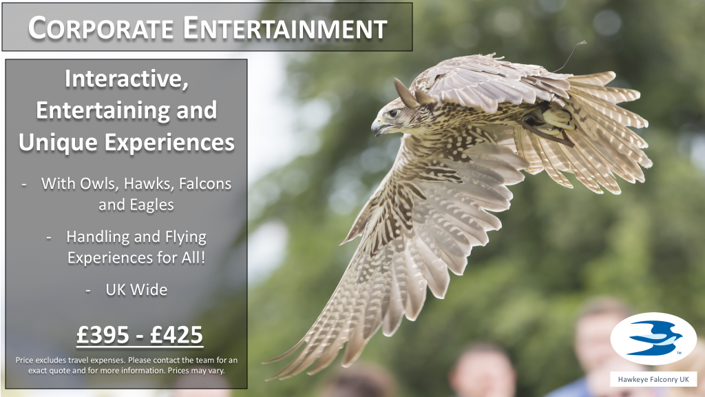 Falconry Corporate Experiences