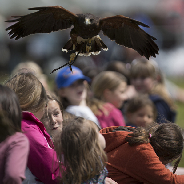 School Visits Falconry