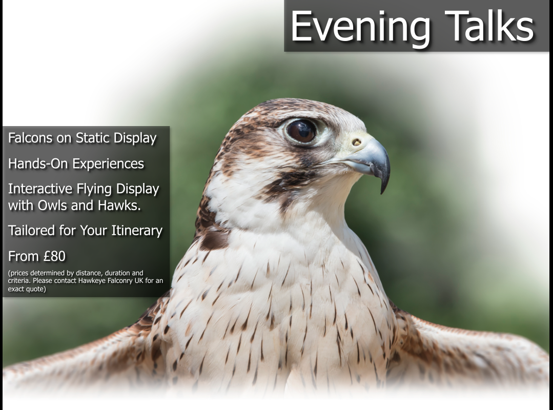Evening Falconry Talks