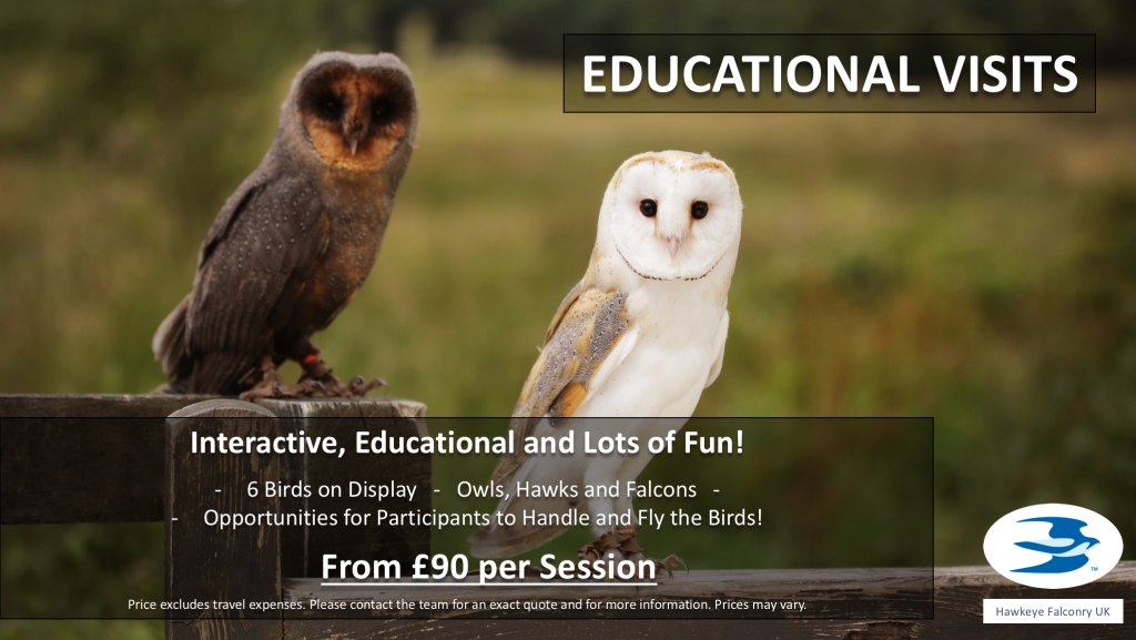 Falconry and Owl School Visits