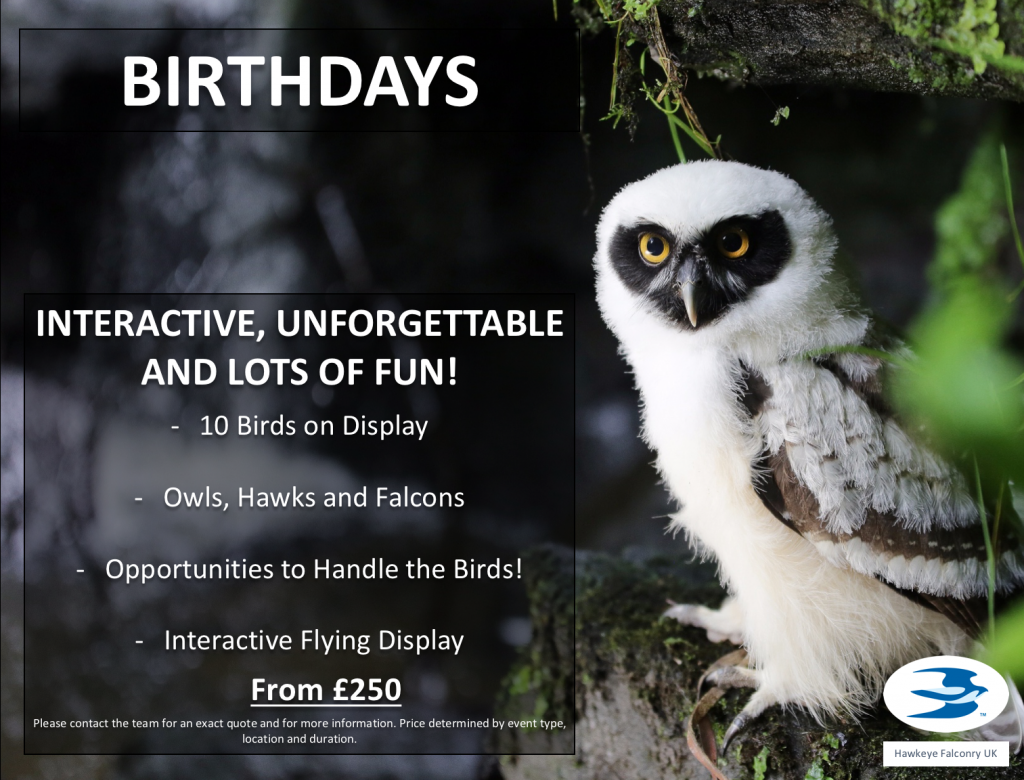 Birthdays Falconry