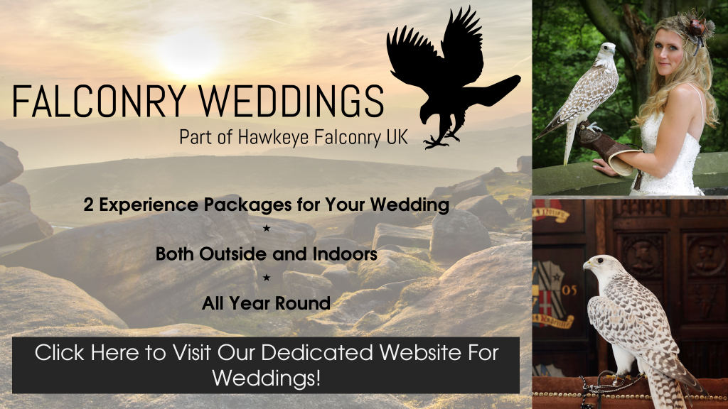 Falconry Weddings