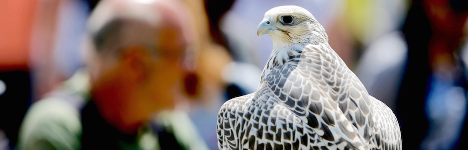 Exclusive Falconry Displays