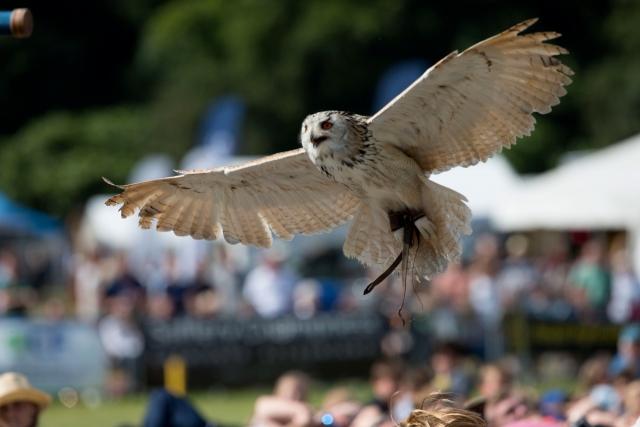 PEBBLES - owl
