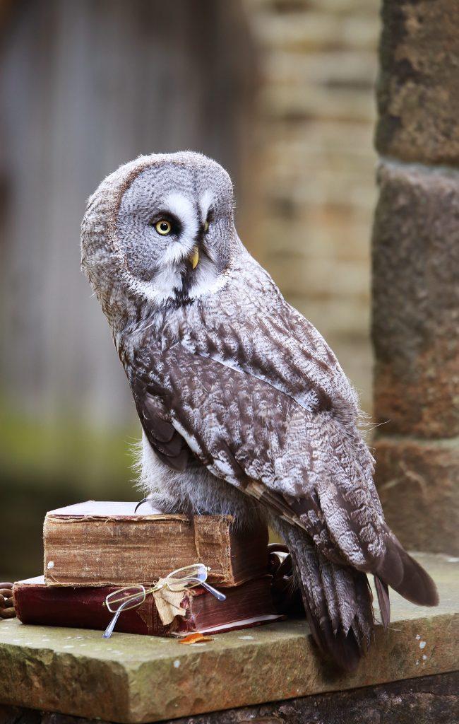 Bluebell - Owl School Visits