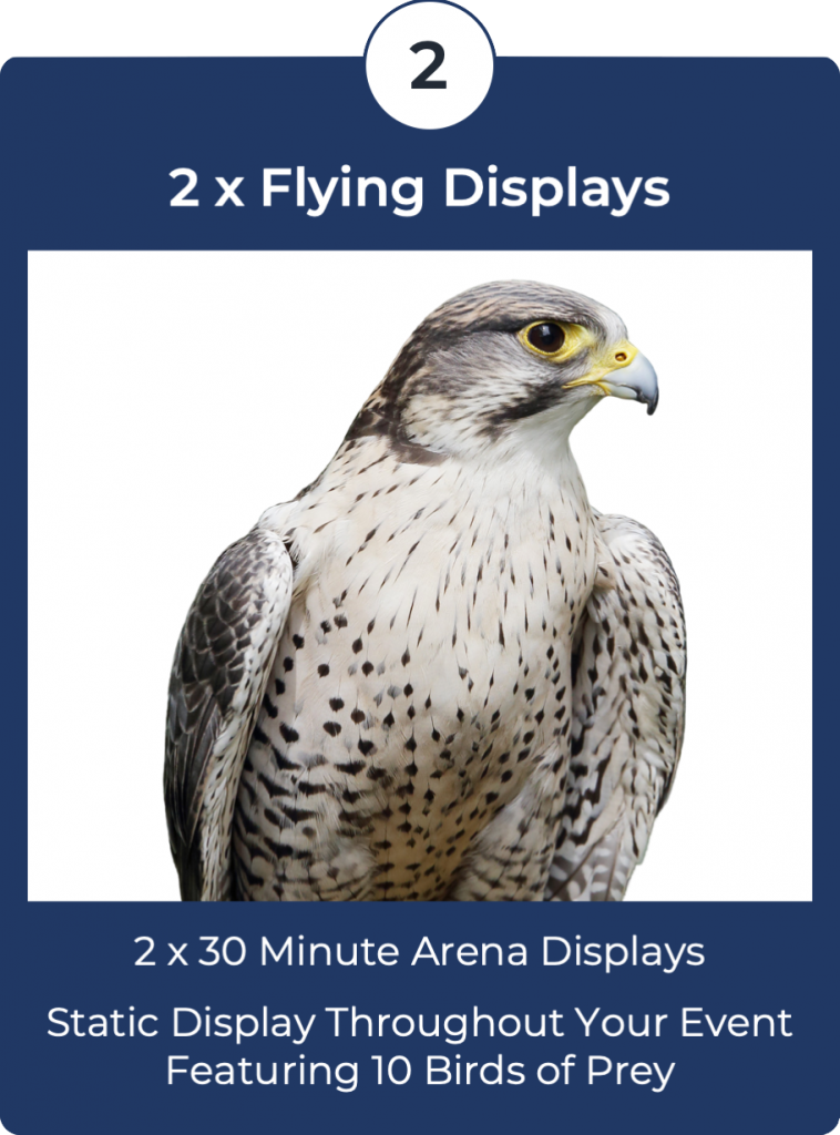 Falconry Displays Package