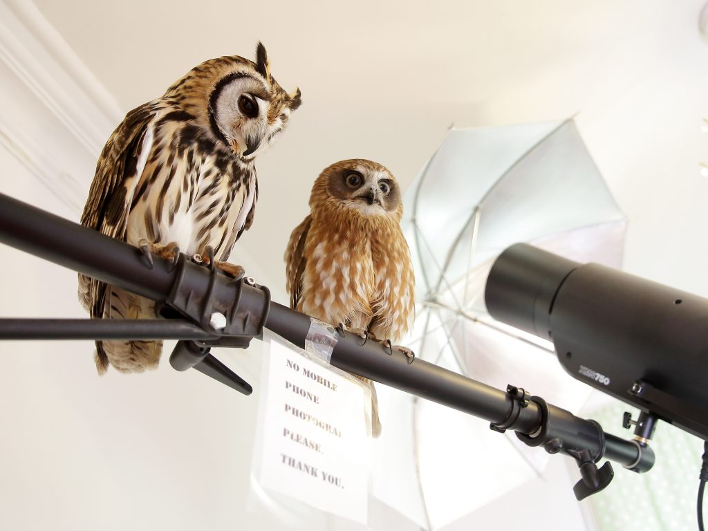 Film and TV Work - Owls