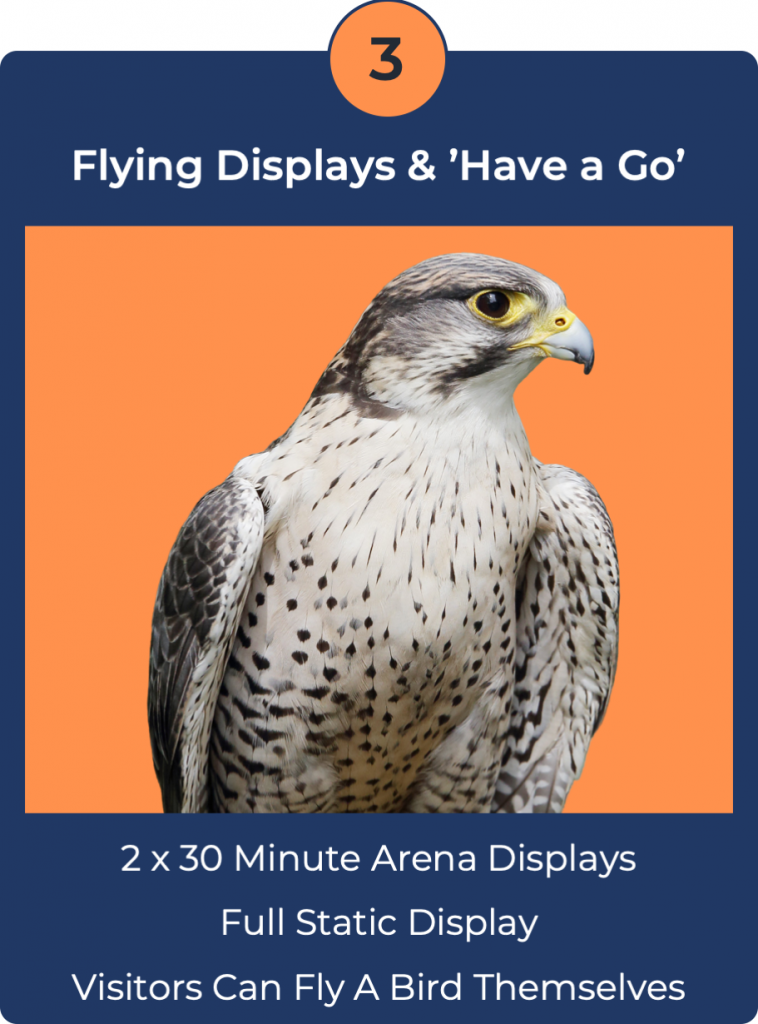 Have a Go Falconry
