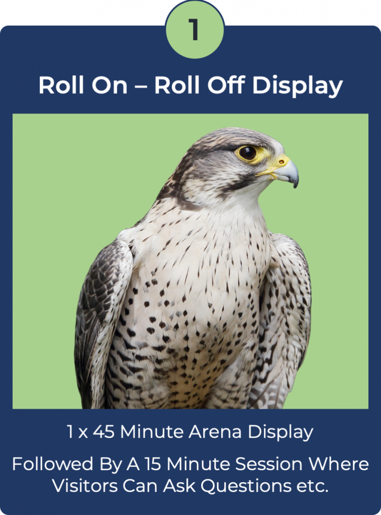 roll on roll off falconry displays
