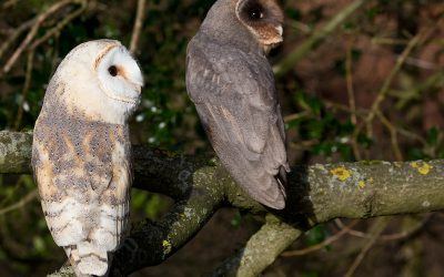 Over £400 for Hawk and Owl Trust