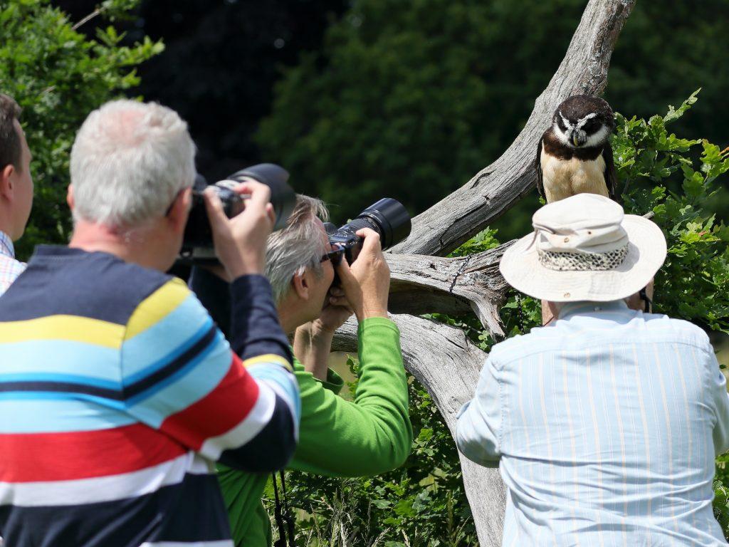 Bird of Prey Photography Workshops