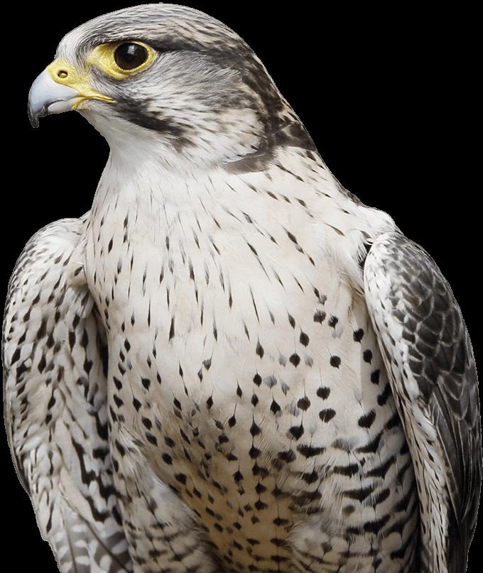 Hawkeye Falconry UK